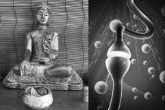 War Buddha Neurologe