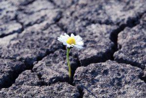 Resilienz staerken